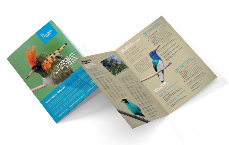 a mockup of an a4 leaflet graphic design motmot travel small
